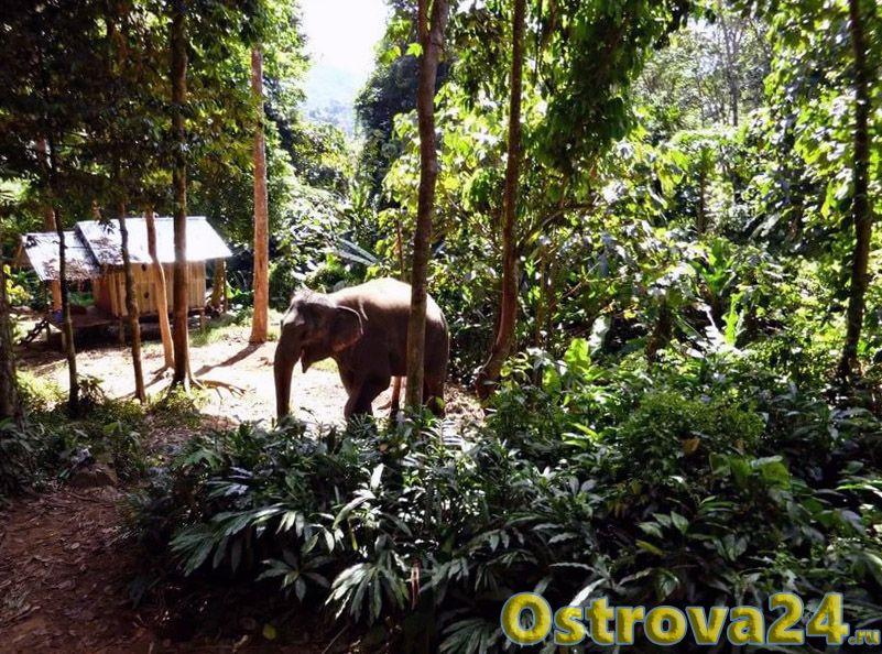 Тайские джунгли